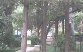 北京林业大学校景