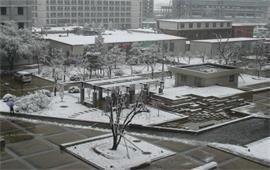 北京林业大学冬景